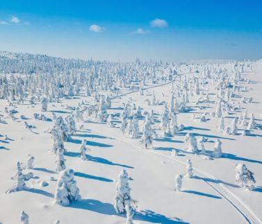 Зимние олимпиады Winkid